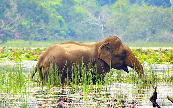 Negombo > Wilpattu