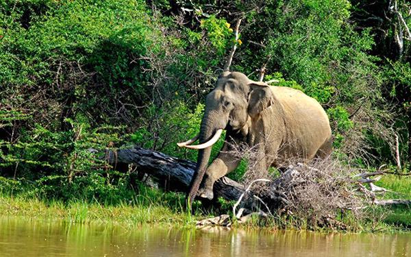 Sigiriya > Polonnaruwa > Sigiriya